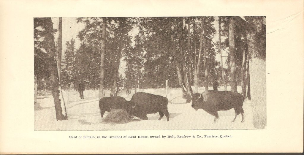 L'enclos des bisons du zoo Holt Renfrew. Brochure publicitaire Montmorency Falls and St. Anne de Beaupré, de la Quebec Railway Light & Power Co'y, publiée distribuée vers 1891