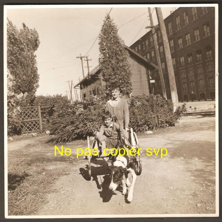 Des garçons avec une voiturette tirée par un chien. Il sont devant l'usine de la Dominion Textile et la gare du tramway. La photo date probablement des années 1940. Reconnaissez-vous ces garçons?