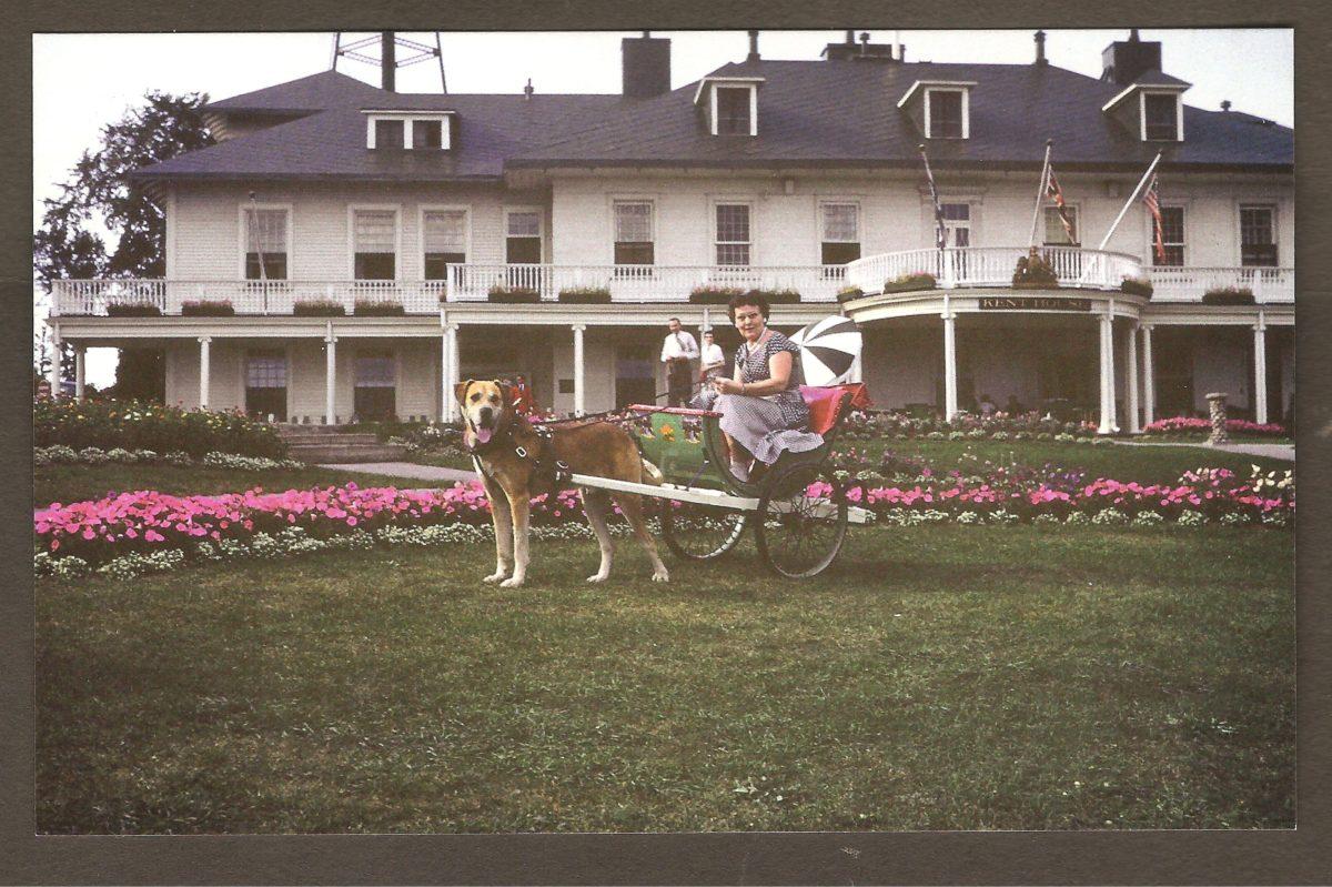 Autre carte montrant une touriste sur une voiturette à laquelle un chien est attelé.