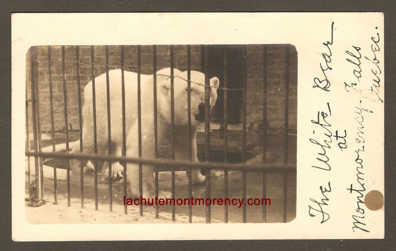 Une carte postale de type «photo véritable» datant vraisemblablement des années 1905-1910. On y voit un ours polaire dans sa cage, au zoo Holt Renfrew.