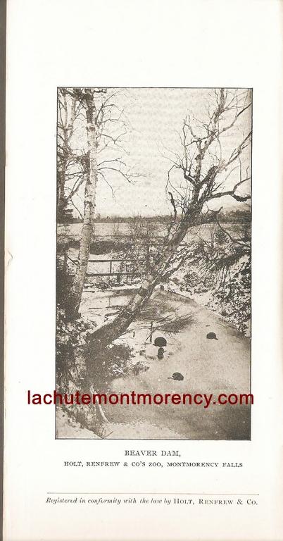 Photo de barrage de castors dans une brochure publicitaire publiée par la compagnie Holt Renfrew, aux environs de 1910, zoo à la chute Montmorency.