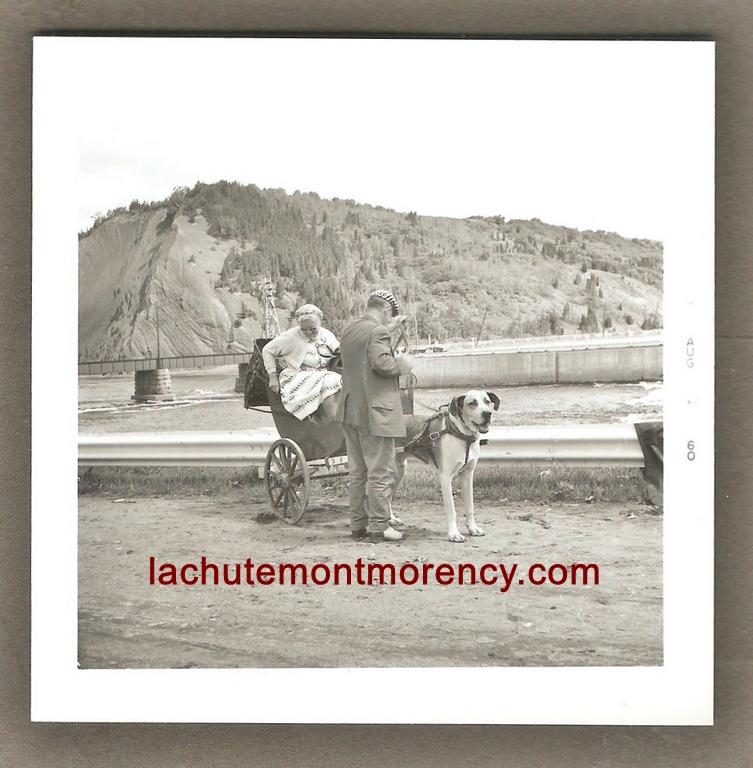 Photo montrant un chien attelé à une voiturette. Cette fois-ci, c'est une touriste qui se trouve à bord. La photographie est datée du 6 juillet 1960 et a été prise en bas de la chute Montmorency, près de la route.