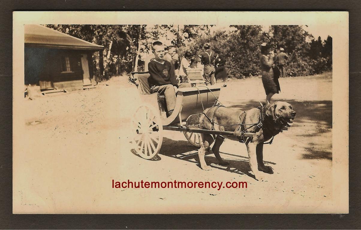 Garçon à bord d'une voiturette tirée par un chien, sur le site de la chute Montmorency, en 1946. La photo a probablement été prise à proximité du pont menant à Boischatel.