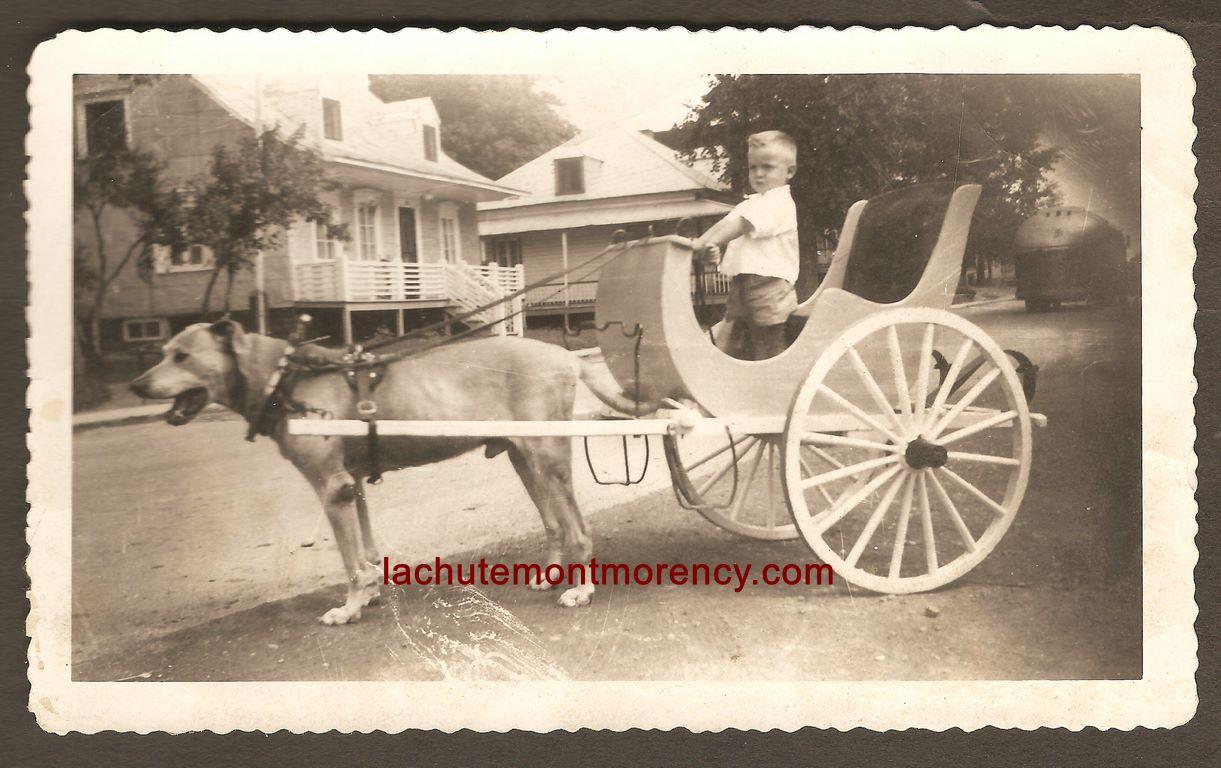Un bambin, debout dans une voiturette à laquelle un chien est attelé. Le texte manuscrit, à l'arrière de la photo, mentionne qu'elle a été prise à l'Ange-Gardien, en 1958.
